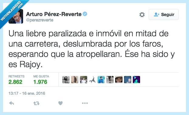 atropellar,carretera,deslumbrada,esperar,faro,inmovil,libre,mitad,paralizada,Rajoy
