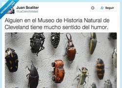 Enlace a De Escarabajo en Escarabajo y tiro porque me toca por @LaCiencibilidad