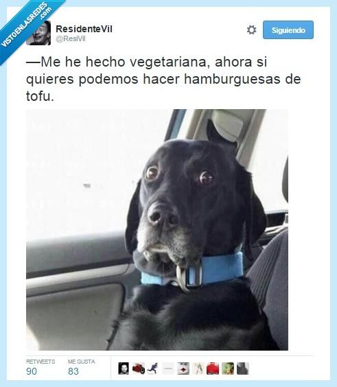no me digas,perro,susto,tofu,vegetariana