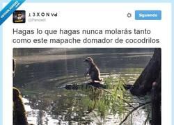 Enlace a El mapache más valiente y más molón por @Panoxet