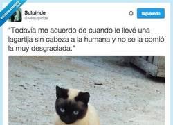 Enlace a Un gato perdona, pero no olvida por @NKsulpiride