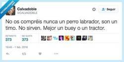 Enlace a No os dejéis engañar por el nombre por @CALVADOBLE