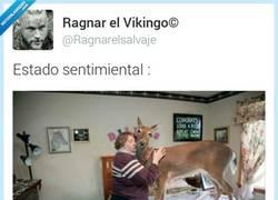Enlace a Loca de los gatos no era suficiente por @ragnarelsalvaje