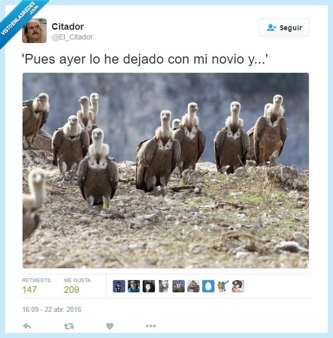 buitres,El Citador,novio,Ruptura,¡Al turrón!