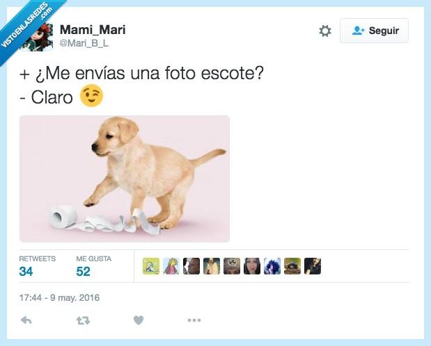 claro,foto,perro,scottex