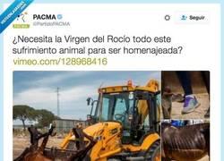 Enlace a El otro lado de El Rocío... El lado de las muertes y el sufrimiento... por @PartidoPACMA