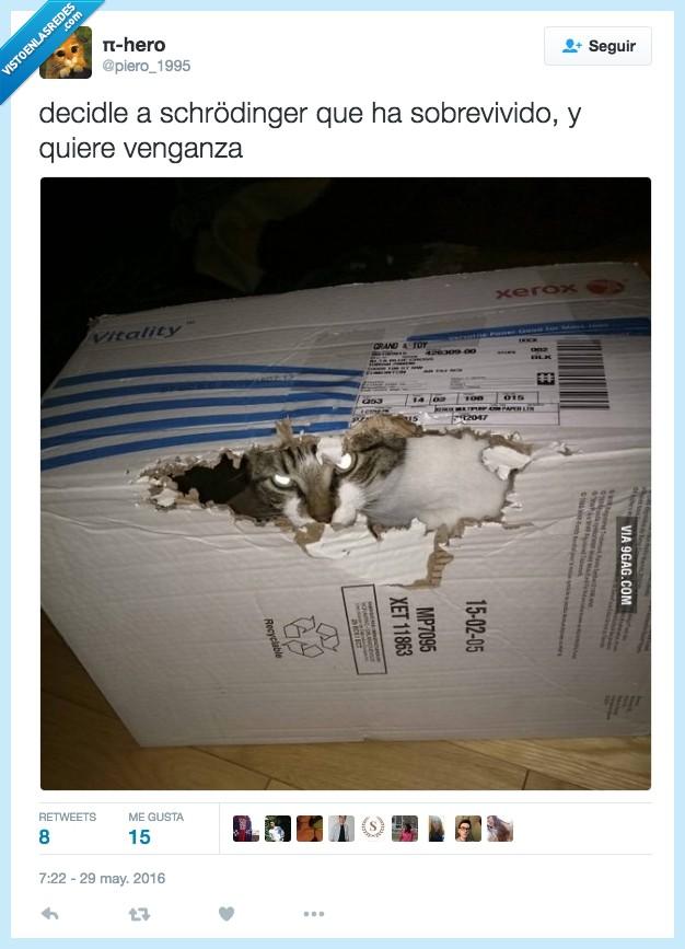 caja,dentro,gato,Schrodinger,venganza,vivo