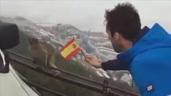 Enlace a Explicación con monos de por qué Gibraltar no quiere ser español