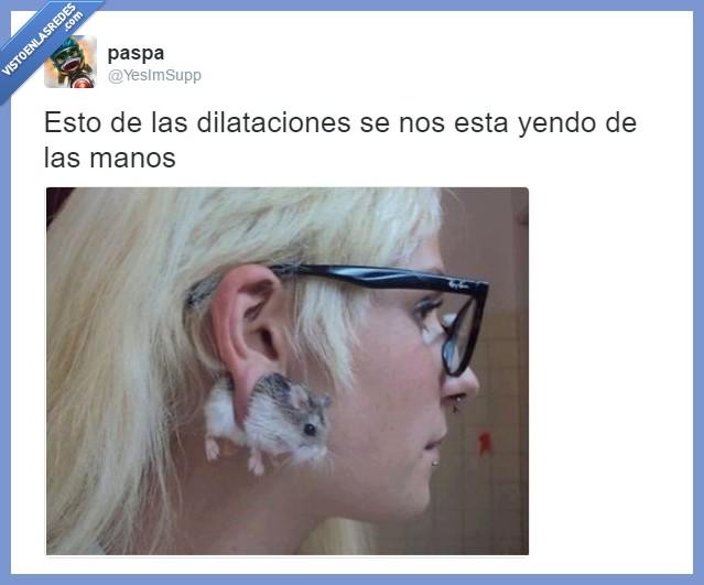 dilataciones,oreja,piercing,rata