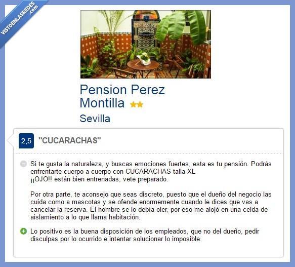 cucarachas,emociones fuertes,pensión,Pérez Montilla,Sevilla