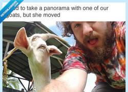 Enlace a Cuando tratas de hacer una foto panorámica con un animal pero se mueve