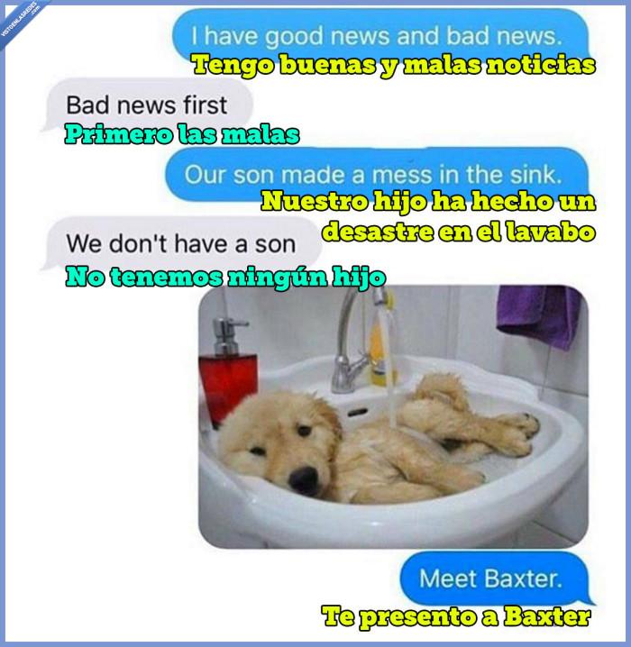 baxter,mascota,noticias