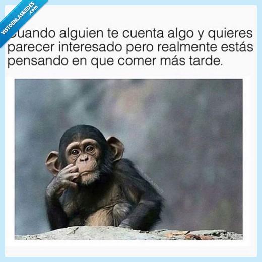 comer,contar algo,mono,parecer interesado