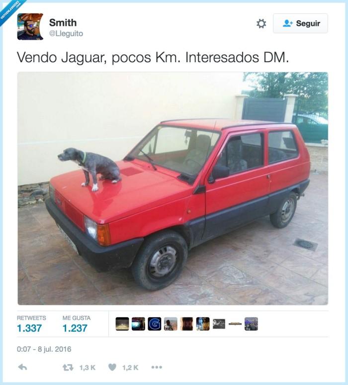 coche,emblema,jaguar,logo,perro