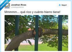 Enlace a A este árbol le falta hierro, por @inkdependence