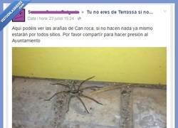 Enlace a Las arañas no son animales y yo sin saberlo