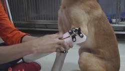 Enlace a La felicidad de este perro que estrena patas