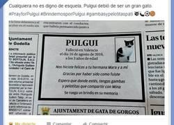 Enlace a Pulgui, el gato más querido
