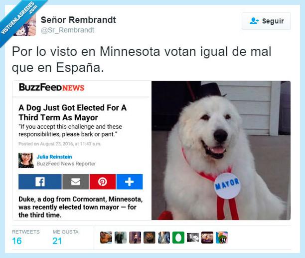 alcalde,españa,mejor,minnesota,perro,votar