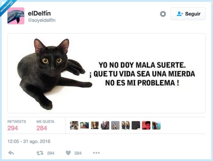 gato negro,mala suerte,superstición,vida