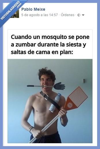 loco,matamoscas,mosquito,siesta,zumbar