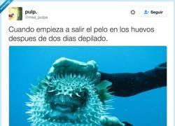 Enlace a No veas como pica, por @mea_pulpa