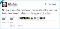 Enlace a No labran nada, por @CALVADOBLE