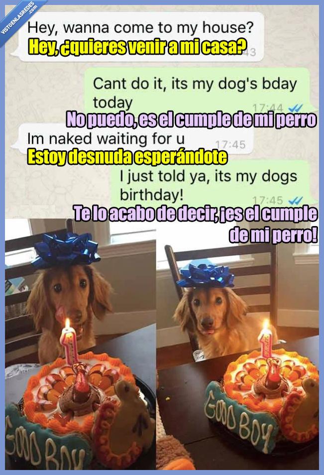 amigo,cumpleaños,perro