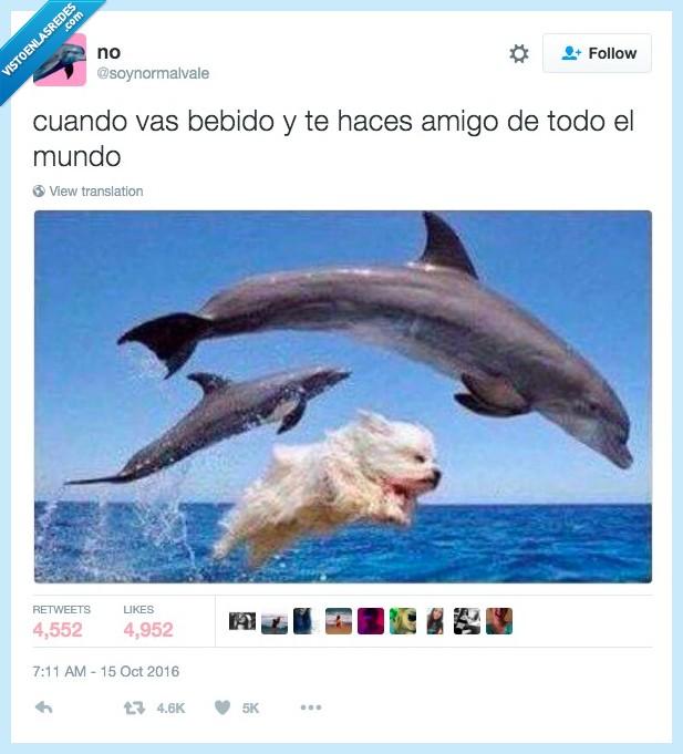 amistad,beber,delfín,perro