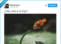 Enlace a Nemo se ha vuelto a pirar y su padre lo está buscando @Willofscythe