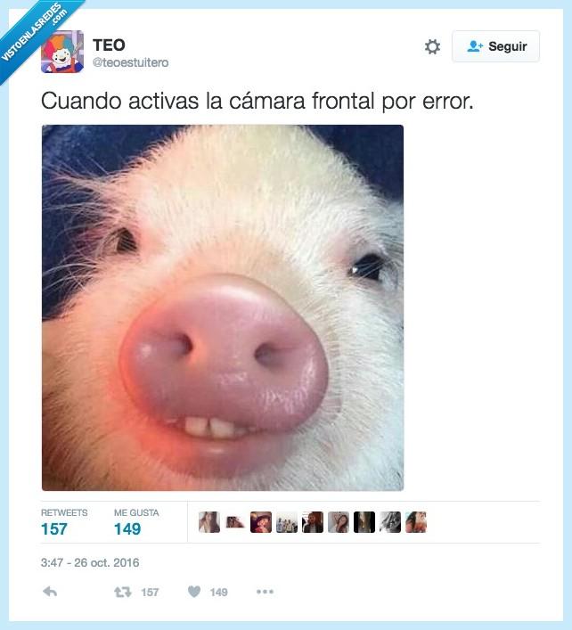 cámara,drama. cerdo,frontal
