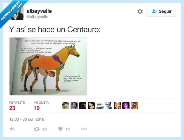caballo,centauro,humano