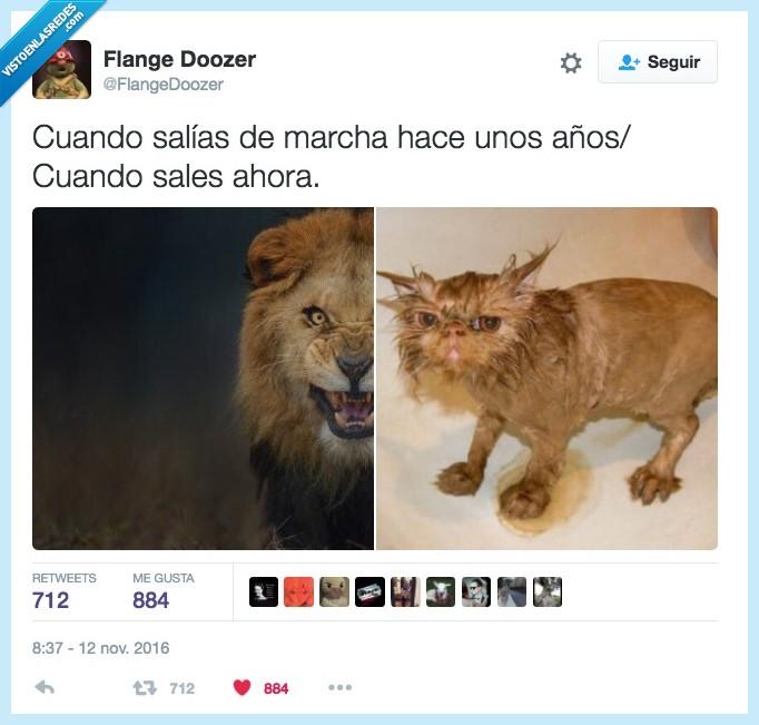fiesta,gato,león,madurar,salir
