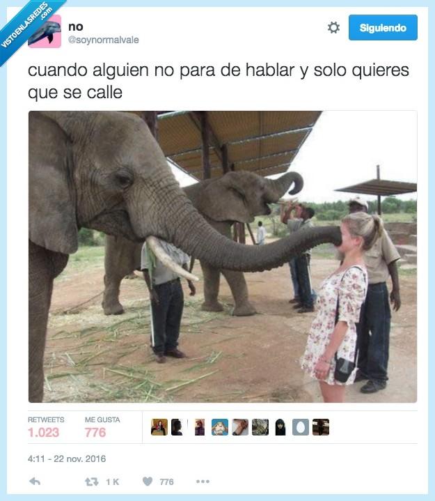 callar,elefante,versión