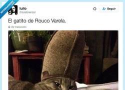 Enlace a El gato que tiene el poder de perdonarte tus pecados por @luislorenzor