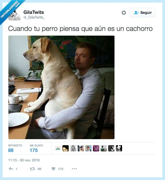 cachorro,perro,pesar
