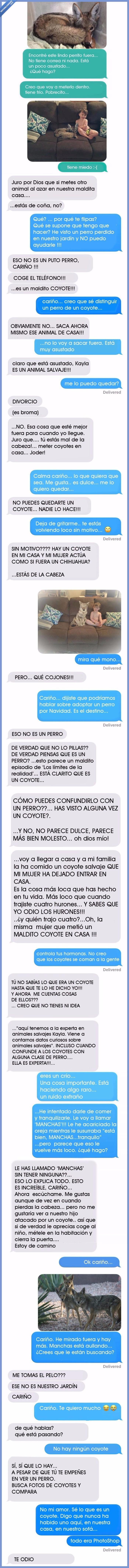 456034 - Le dice a su marido que ha adoptado un perro cuando en realidad es un coyote salvaje