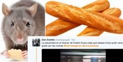 Enlace a Se encuentran ratas en un establecimiento de una famosa cadena de panaderías e Internet estalla
