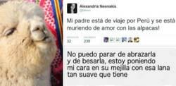 Enlace a Su padre se va a Perú de viaje y le manda estos mensajes hilarantes sobre las Alpacas