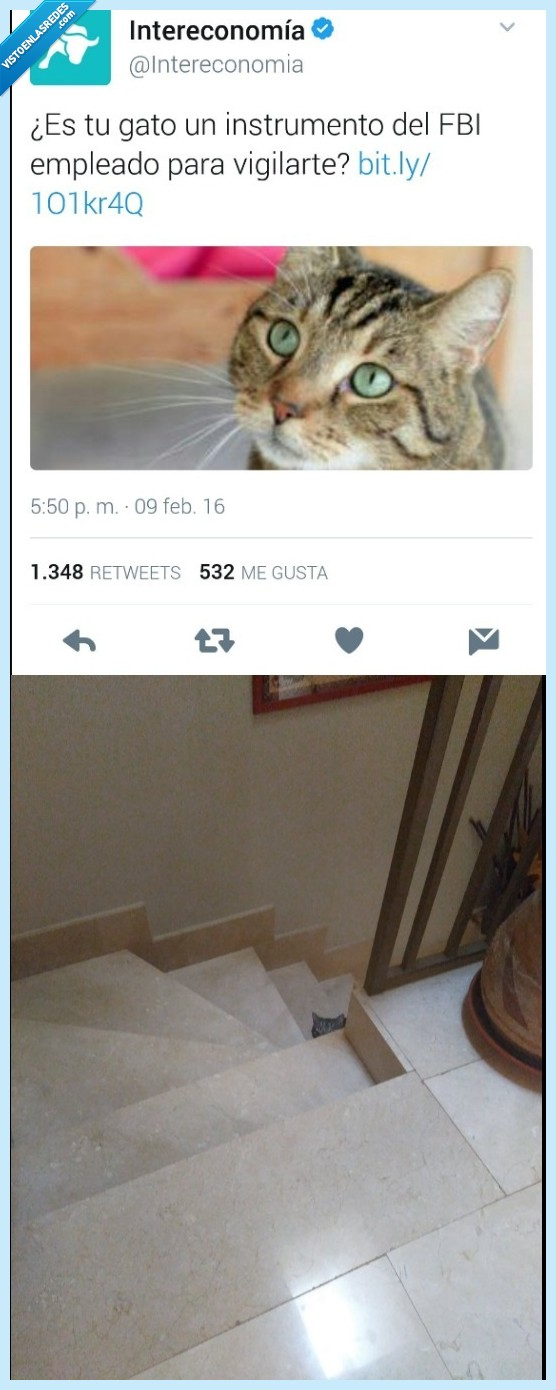 gato,ojos,orejas,pelo