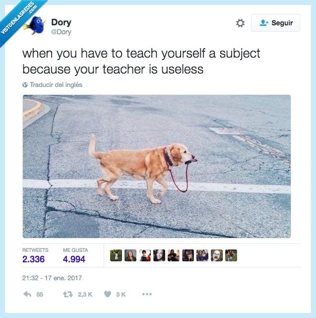 asignatura,enseñar,perro,profesor
