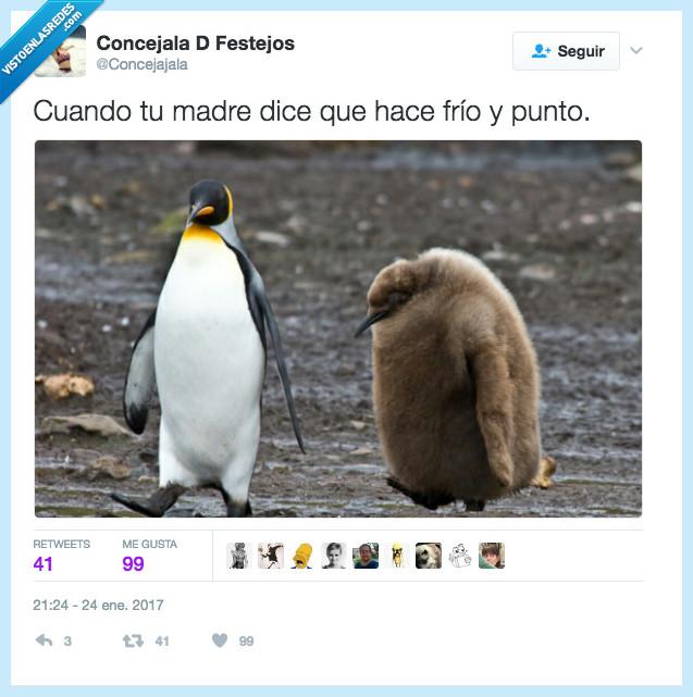 frío,madre,pingüino,rebeca