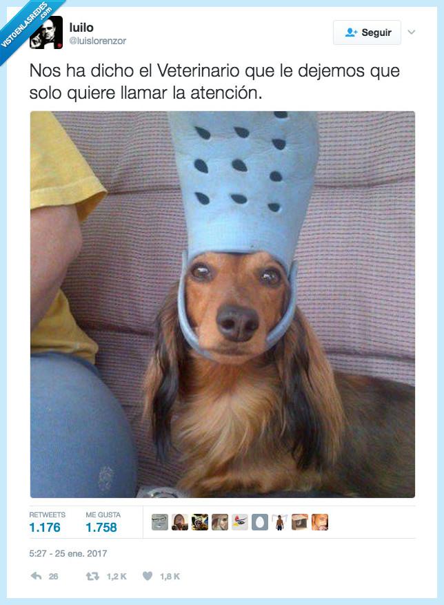 perro,zapatilla