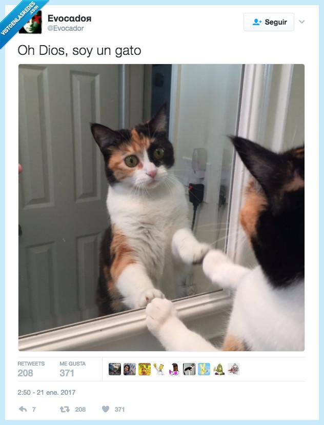 eres tu,gato,soy yo
