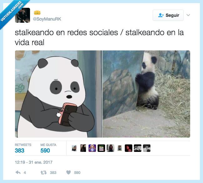 oso,panda,redes,stalkear,vida real