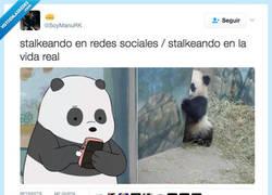 Enlace a Se las saben todas estos pandas por @SoyManuRK