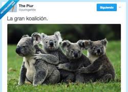 Enlace a El gobierno más koaliado del mundo por @puringerMe