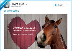 Enlace a Horse Luis el caballo más famoso de First Dates por @MarifeLacio