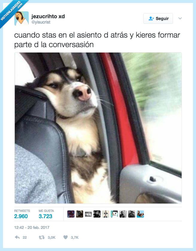 asiento,conversacion,perro