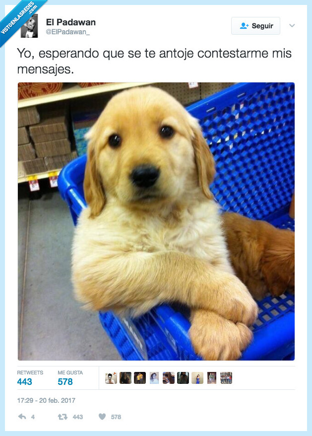 leer,perro,sentado